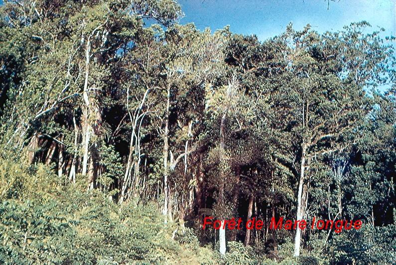 La végétation naturelle de La Réunion.