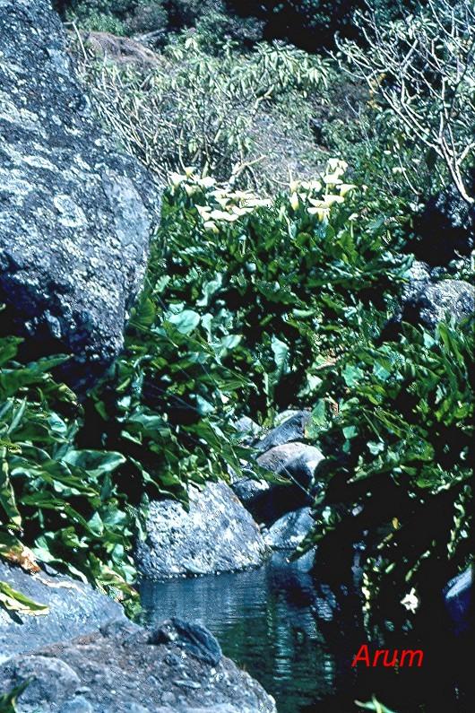 La forêt mésotherme hygrophile.