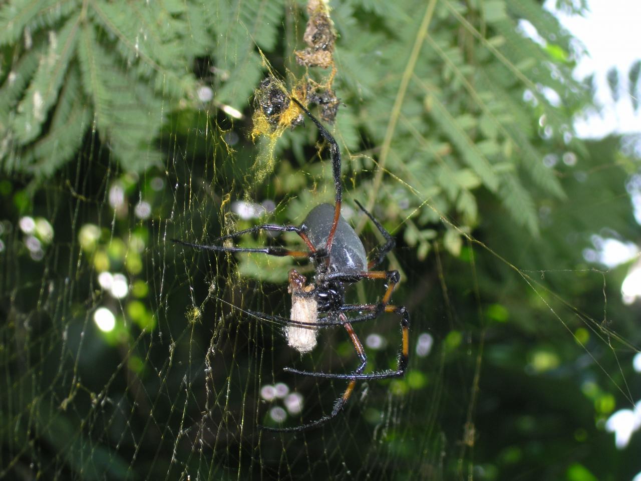 araignée et sa proie 2