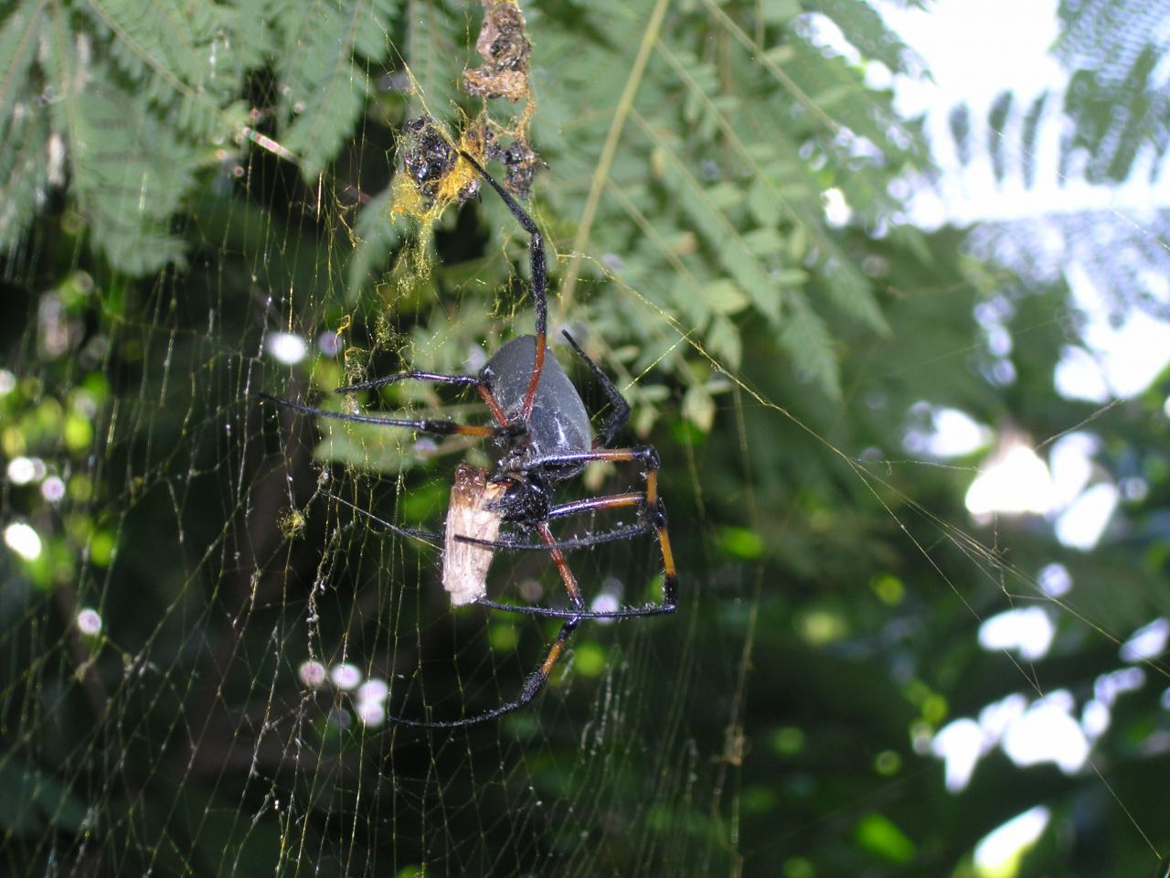 araignée et sa proie