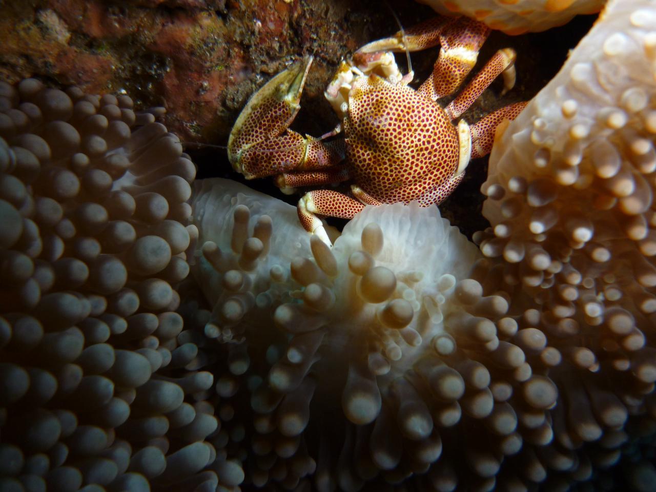 Crabe 2 D Helsens