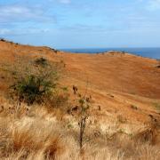 Savane du Cap La Houssaye 2.