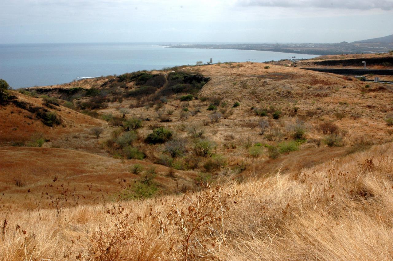 Savane du Cap La Houssaye 3.