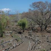 Espace aménagé par le forum social dans la savane du Cap La Houssaye
