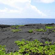 Les coulées basaltiques de la Pointe de la Table.