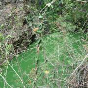 Le Bassin Divon dans la ravine du Bernica.