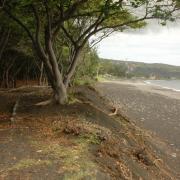 Erosion sur la plage D Helsens