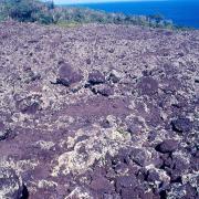 lichens sur coulées