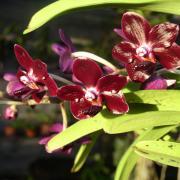 Orchidées 3 D Helsens
