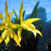 orchidées D Helsens