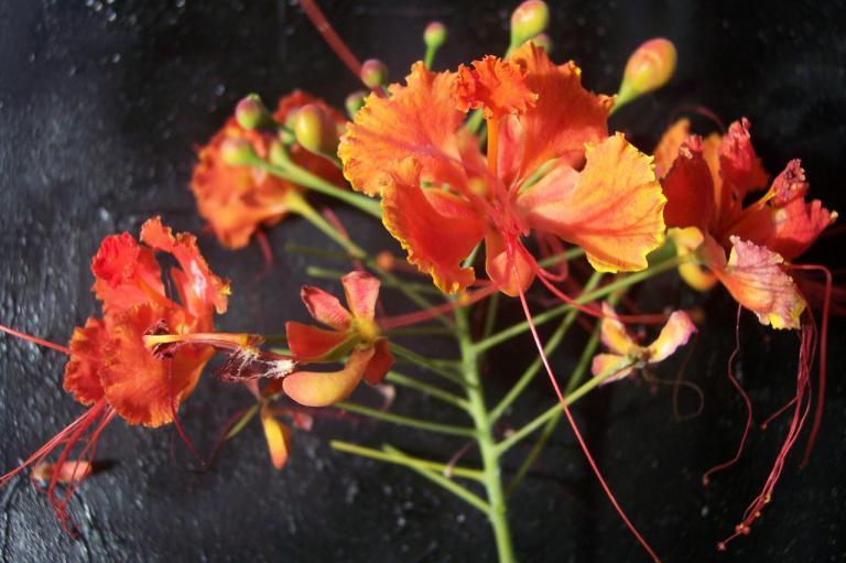 Orgueilgroupe de fleurs