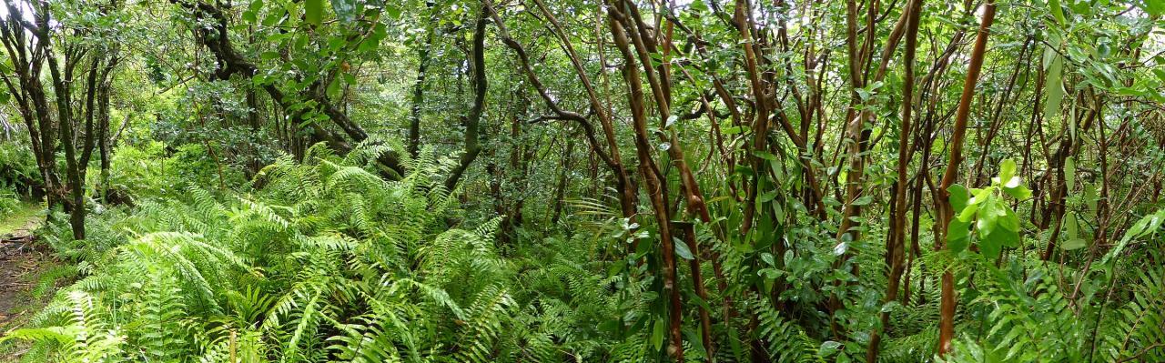 Vue panoramique : sous-bois dans la région de St Philippe.