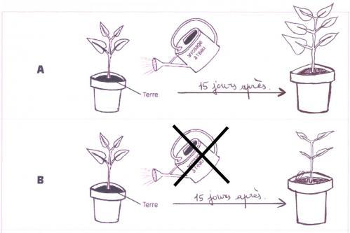 Besoins en eau des plantes
