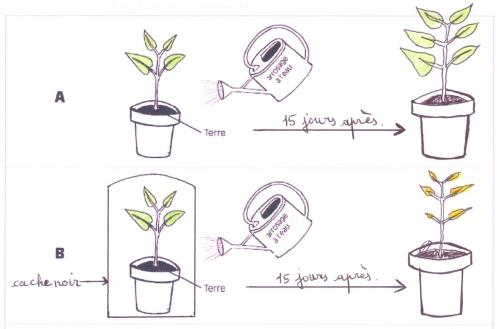 Besoins en lumi re des plantes