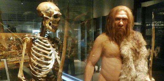 Le squelette d un homme de neandertal et sa modelisation au musee ds sciences naturelles de tokyo