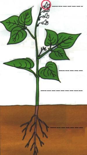 Parties d une plante